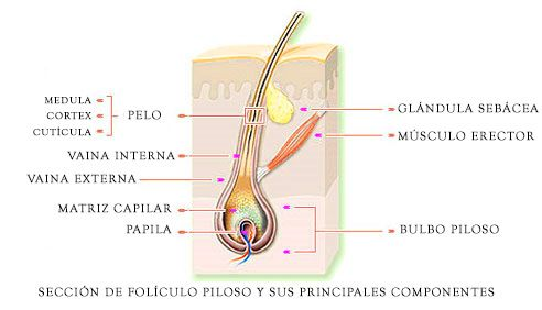 Unitats foliculars
